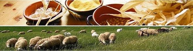 Corso Imprenditore Agricolo Professionale lazio